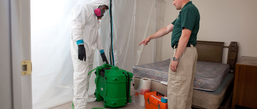 Stevensville, MD mold removal process